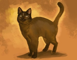 americangodsWEB-the small brown cat