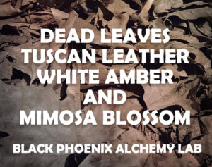 deadleaves2017 WEB dead leaves tuscan leather white amber and mimosa blossom
